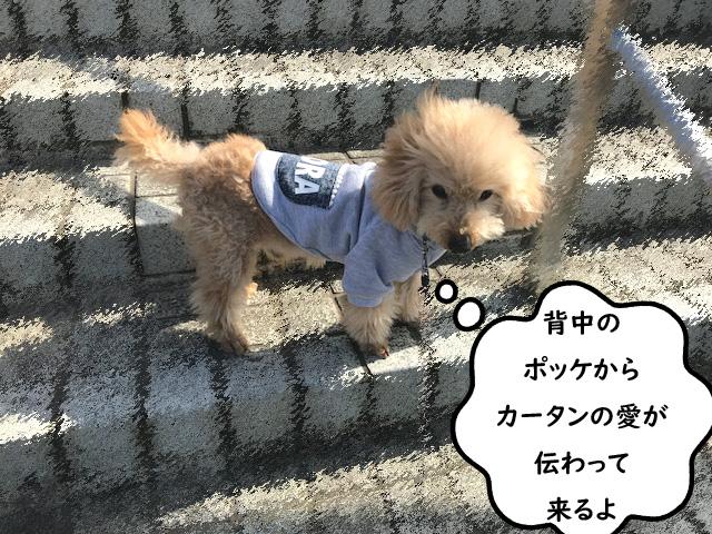 パーカーに名前を入れました【犬服】