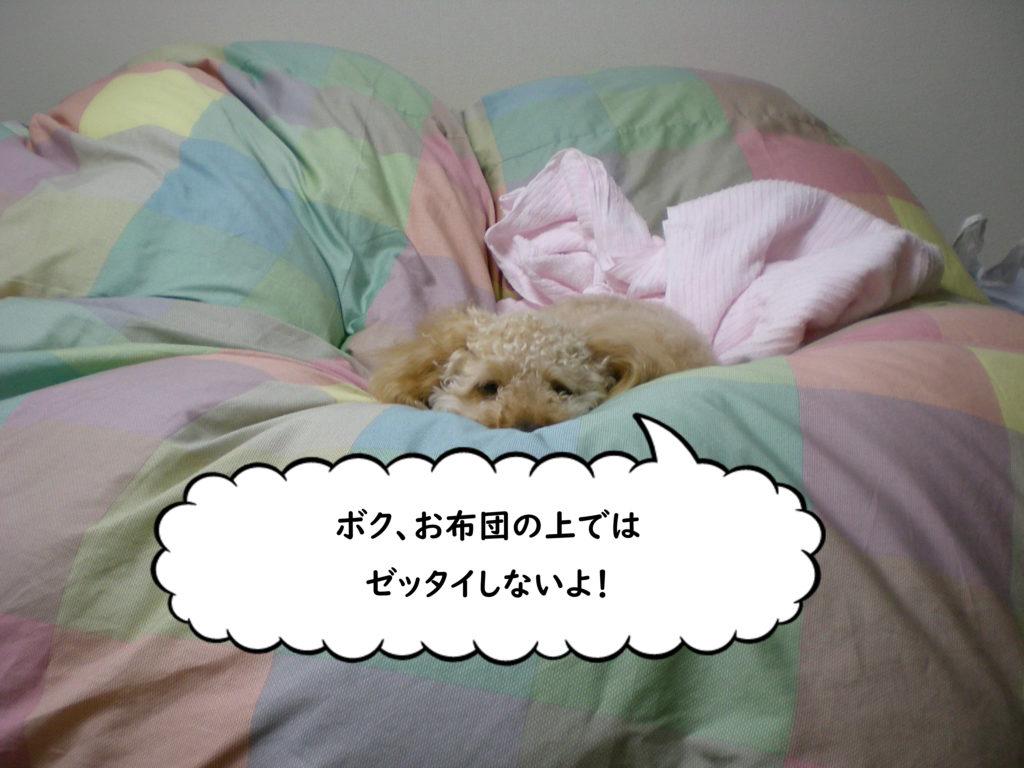 寝るときはどうしてるの? 犬が失敗しないトイレ【100均材料でDIY】おススメの手作りトイレ10 トイプードルの空