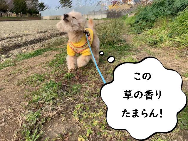 「この草の香り、たまらん!