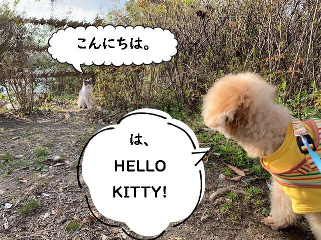 こんにちは!ハローキティ。