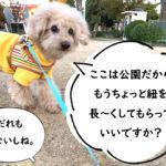 愛犬に伸縮リード メリット デメリット