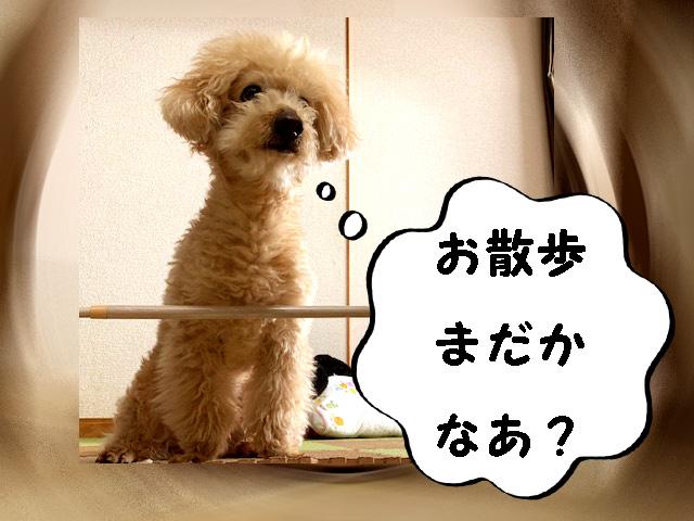 【運動不足の解消に】愛犬と一緒に楽しい室内あそび☆トイプードルの空