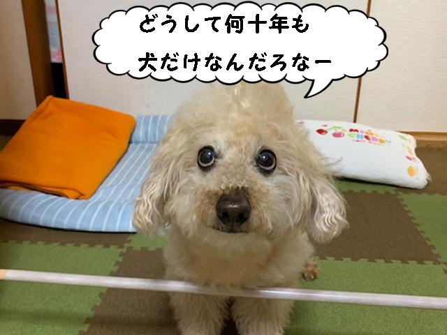 感染経路と狂犬病予防接種率 [どうして何十年も犬だけなんだろな~」 トイプードルの空