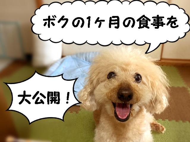 食べない日はなかったよ♪食欲旺盛なトイプードル【高齢犬の食事】手作り犬ごはん