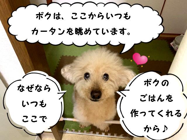 【高齢犬の食事】後編☆食べない日はなかったよ♪手づくりトッピングの簡単レシピ【トイプードルの空】