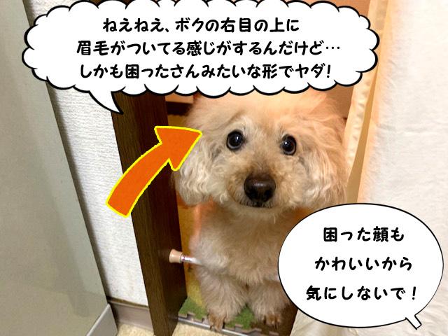 【高齢犬の食事】後編☆食べない日はなかったよ♪手づくりトッピングの簡単レシピ【トイプードルの空】2