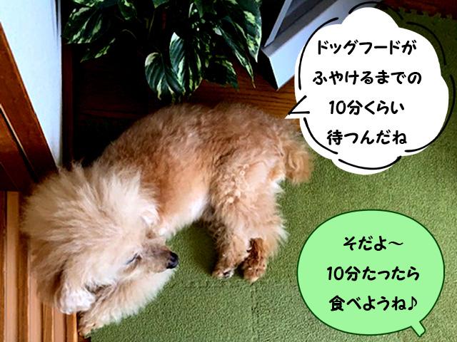 手づくりトッピングごはん7-1【トイプードルの空】