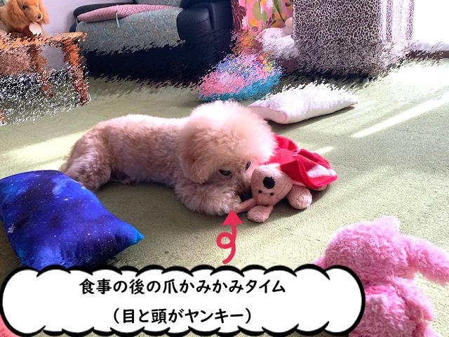 犬が喜ぶフード【高齢犬】手作り犬ごはん トイプードルの空