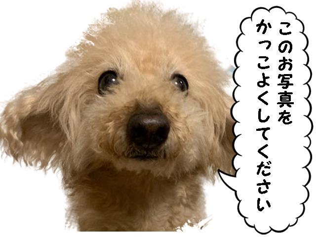 愛犬の写真を、おしゃれにイラスト化したい!